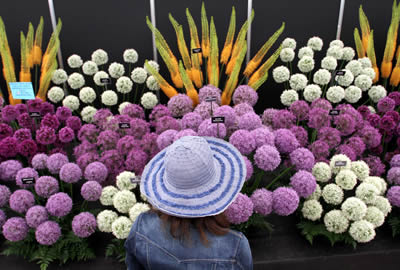 Ireland's own Chelsea flower show is Bloom-ing lovely
